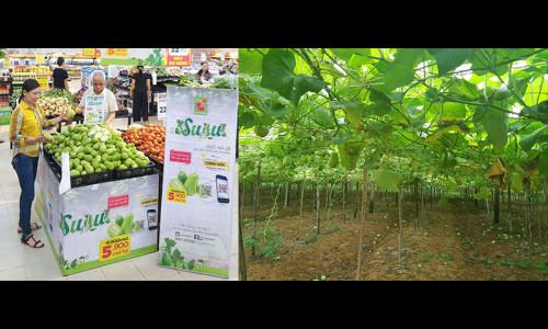 """Cơ hội mua sắm """"Đặc sản su su Nghệ An trồng trên cát"""" tại Big C miền Trung và Nam"""